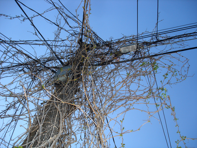 wires and vines