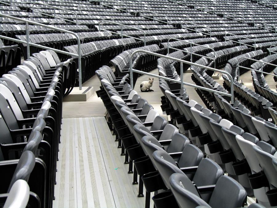 stadium kitty