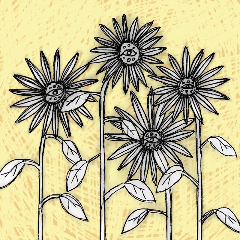suns flowers